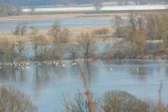 Überflutete Polderwiesen bei Stützkow